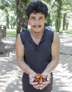 Un miembro de la Asociación de Productores de Palma del Valle del Aguán sostiene los frutos de los cuales se extrae el aceite de palma. Crédito: USDA / cc by 2.0