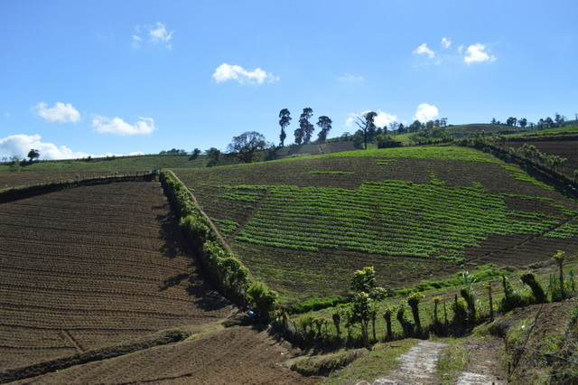 Los agricultores de Pacayas trazan las líneas de cultivo con cierta inclinación, para que las lluvias no laven sus terrenos. Crédito: Diego Arguedas Ortiz/IPS