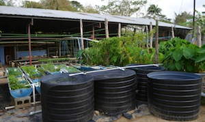 La permacultura lista para conquistar el Caribe