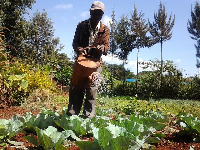 Los agricultores de Kenia, especialmente los pequeños productores, viven tiempos de incertidumbre ya que las condiciones climáticas extremas hicieron que las principales fuentes de agua del país produzcan menos que antes. Crédito: Miriam Gathigah/IPS