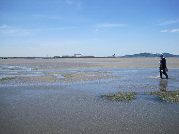 Restauración de las zonas intermareales en la bahía de Mikawa de la prefectura de Aichi, en el centro de Japón. Crédito: Cortesía del Instituto de Investigación Pesquera de Aichi (AFRI)