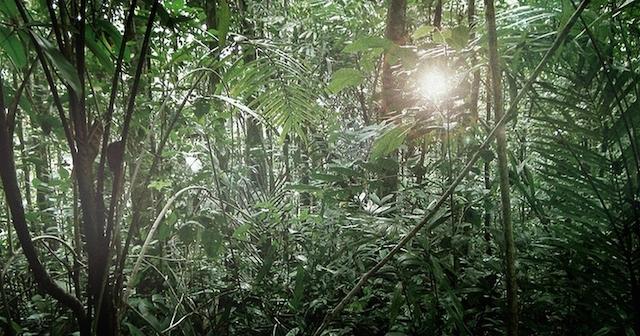 El bosque de Kasigau prospera gracias a los esfuerzos de conservación y la aplicación de un proyecto de REDD+. Cortesía: Wildlife Works