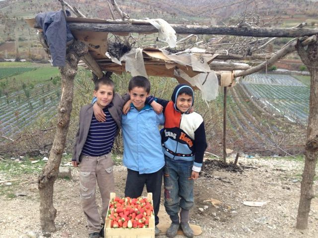 Niños turcos con a una caja de fresas que recién cosecharon. La respuesta ante los efectos del cambio climático de la agricultura será clave para poder alcanzar los Objetivos de Desarrollo Sostenible. Crédito: PNUD
