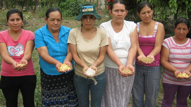 Productoras rurales del departamento de Piura, en el norte de Perú, muestran algunas semillas nativas que preservan. Crédito: Sabina Córdova/IPS.