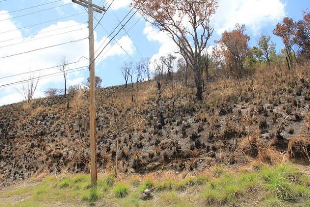 Las consecuencias de un incendio forestal en el sur de San Vicente y Granadinas. Crédito: Kenton X. Chance/IPS