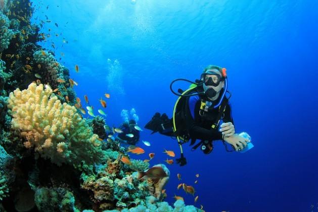 En el mundo, 75 por ciento de los arrecifes de coral están amenazados por la sobrepesca, la destrucción del hábitat, la contaminación y la acidificación de los océanos a causa del cambio climático. Crédito: Bigstock