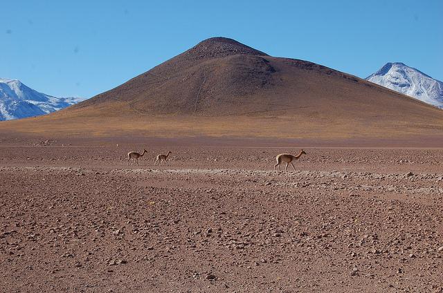 El desierto de Atacama, el más árido del mundo, acoge parte importante del potencial geotérmico de Chile y es el asiento de la primera planta sudamericana para aprovechar esa energía. Crédito: Marianela Jarroud/IPS