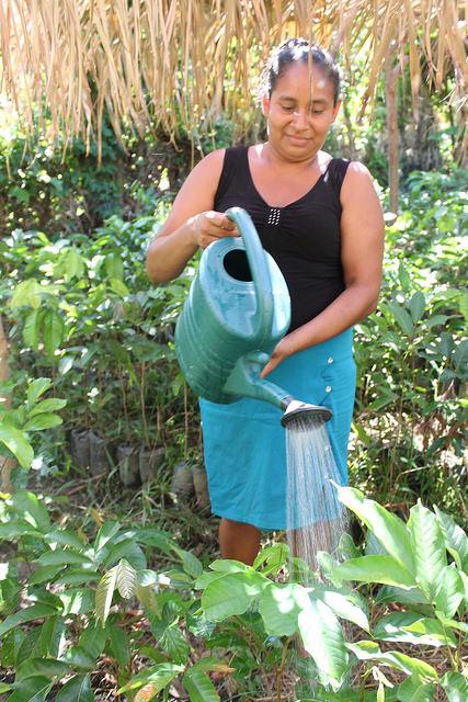 Belkys García es la responsable del vivero de Plan Grande, destinado a reforestar la cuenca del río Matías, que abastece la minirrepresa de la aldea y a cultivar árboles frutales y maderables para generar ingresos para la aislada comunidad de pescadores, situada en el norte caribeño de Honduras. Crédito: Thelma Mejía/IPS