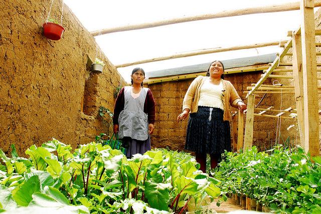 Dos de las horticulturas periurbanas de Sucre, la capital oficial de Bolivia, muestran orgullosas una de las carpas solares, los huertos tipo invernadero que familias de 83 barrios de los suburbios de la ciudad han instalado en sus patios, como parte del nacional Programa de Agricultura Urbana y Periurbana. Crédito: Franz Chávez/IPS