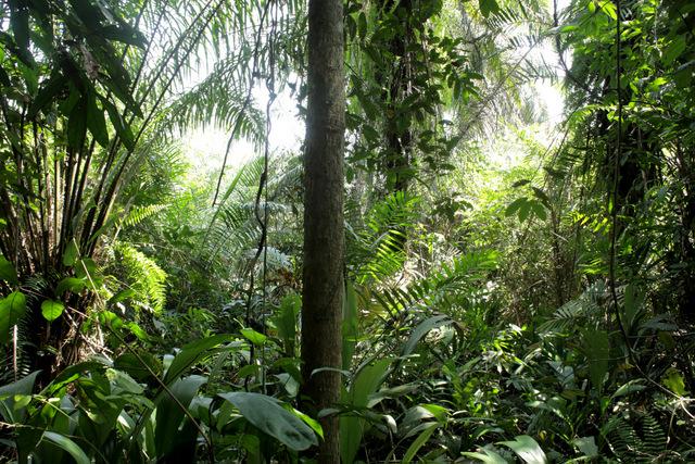 Las comunidades locales de Liberia dependen de los recursos de sus bosques, que son además un sitio espiritual para sus pobladores, por contener sus espacios sagrados. La gestión comunitaria sostenible de estos bosques es crucial para proteger la vida y el patrimonio y de esas comunidades, así como para preservar la mayor porción de selva tropical que queda en África  occidental. Crédito: Jason Taylor/Amigos de la Tierra Internacional