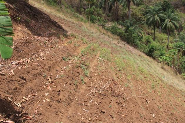Las precipitaciones por debajo del promedio pronosticadas para la región del Caribe tendrán un impacto negativo en la agricultura, lo que podría derivar en un aumento del precio de los alimentos en 2016. Crédito: Kenton X. Chance/IPS.