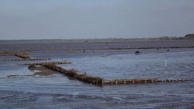 Suriname combate la erosión con diques permeables que rompen las olas y retienen sedimentos para ganarle tierra al mar. Crédito: Sieuwnath Naipal