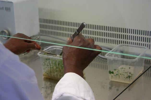 Invertir en investigaciones científicas puede ayudar a África a alcanzar los Objetivos de Desarrollo Sostenible. Crédito: Busani Bafana/IPS.