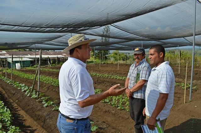 Las familias agrícolas costarricenses florecen en la sombra