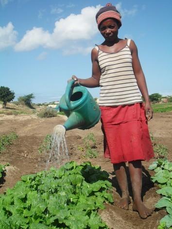 A pesar de la sequía, algunos campos del sur de Madagascar siguen verdes y sanos porque los agricultores adoptaron prácticas inteligentes contra el clima. Crédito: Miriam Gathigah / IPS