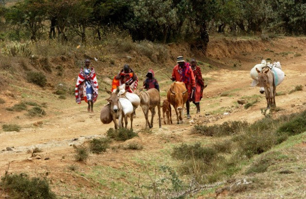 Pastores masai de Kenia llevan su ganado al mercado local. Crédito: Vitale/ FAO