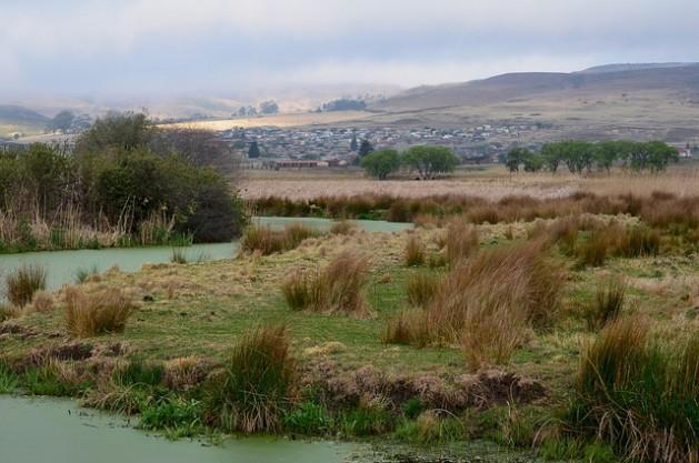 Humedal en Wakkerstroom, en la provincia sudafricana de Mpumalanga, es una fuente estratégica de agua para Sudáfrica, Lesotho y Swazilandia que solo tiene ocho por ciento de tierras, pero es responsable de 50 por ciento del suministro hídrico. Crédito: Mark Olalde/IPS.