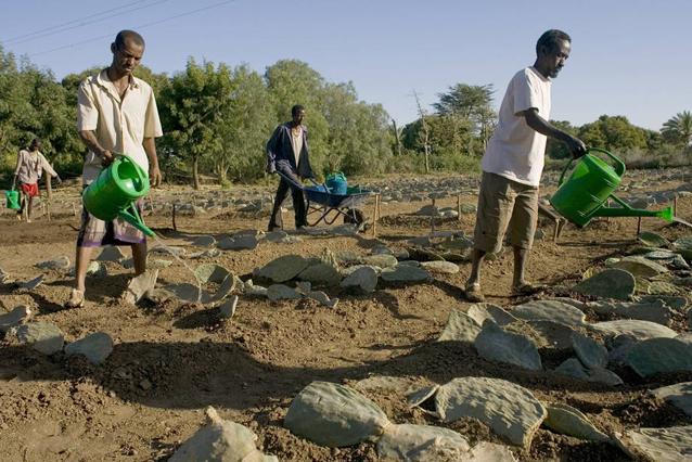 La distribución de semillas ayuda a los agricultores de Etiopía a recuperarse después del fenómeno climático de El Niño. Crédito: FAO