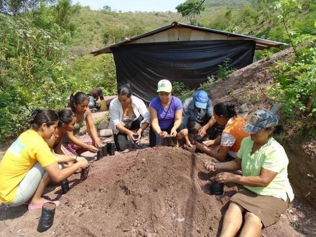 Integrantes de una de las cooperativas agropecuarias de mujeres de Nicaragua trabajan juntas en la instalación de un vivero de mil plantas maderables y frutales para enfrentar el cambio climático en una comunidad del departamento de Madriz. Crédito: Femuprocan
