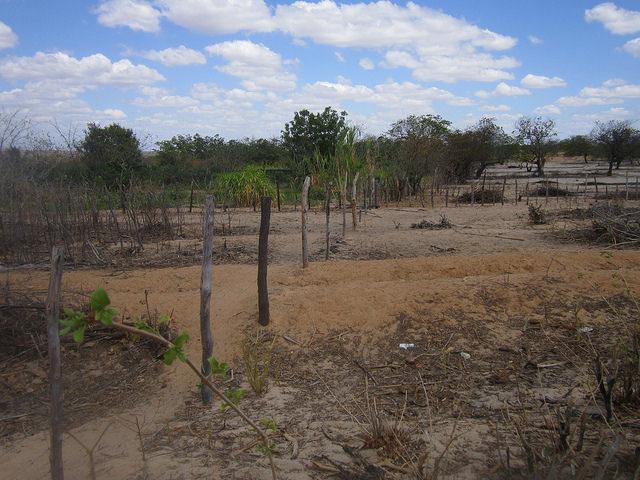 El contraste entre el verde el huerto cultivado por mujeres del Asentamiento Primer de Mayo y la sequedad de los alrededores, en el estado de Rio Grande do Norte, en el Nordeste de Brasil. Crédito: Mario Osava/IPS
