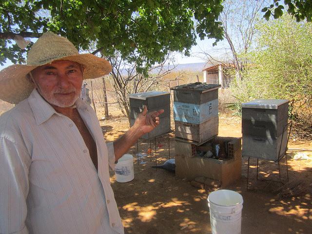 Manoel Barros apunta las cajas para colmenas de su pequeña finca, ahora inútiles porque las abejas se fueron por la sequía. La producción de miel, una de las fuentes de ingresos de muchas familias campesinas, tendrá que esperar al retorno de las lluvias al Nordeste de Brasil.  Crédito: Mario Osava/IPS
