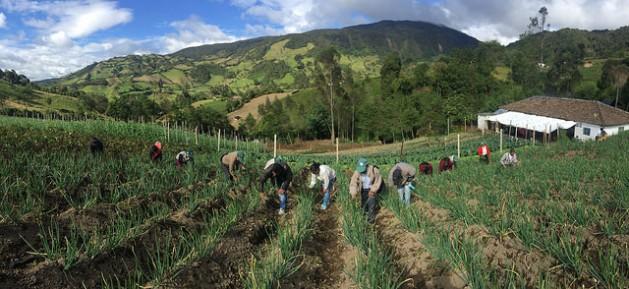 Pequeños agricultores mientras comparten la faena del campo en una finca familiar, en América Latina. Crédito: Camilo Vargas/FAO