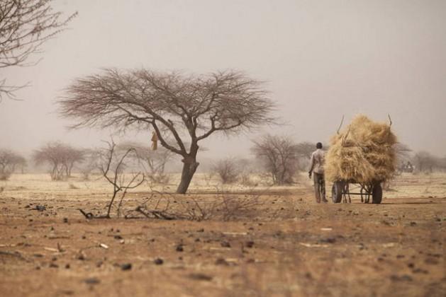 Un agricultor que transporta heno al mercado semanal de Tera, en Níger. Crédito: FAO
