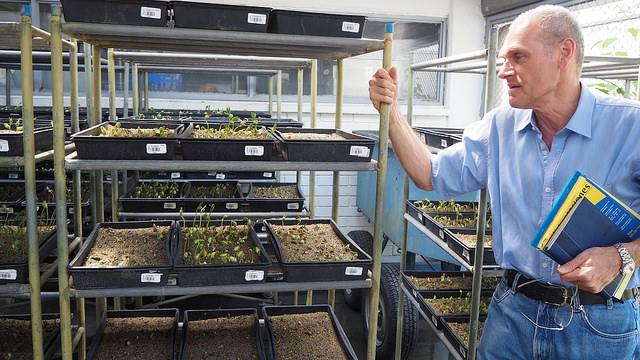 Director del banco de semillas del CIAT, en Colombia, Daniel Debouck. Crédito: Ida Karlsson/IPS
