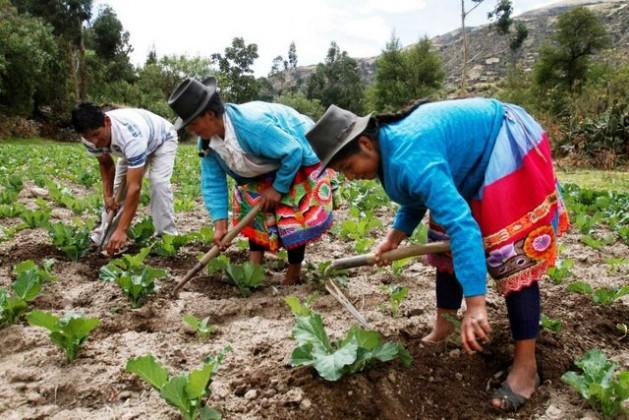 Con un enfoque de género se busca que mujeres y hombres de América Latina y el Caribe sean beneficiados por el igual por el plan de la Celac para erradicar el hambre y promover la seguridad alimentaria. Crédito: FAORLC