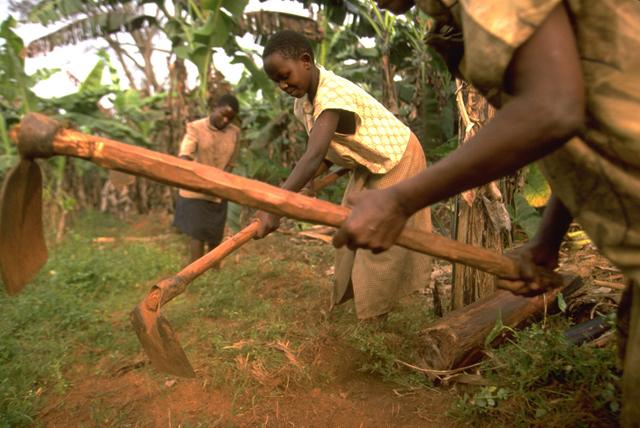 Las campesinas de Uganda necesitan mejores herramientas  de mano y de tracción animal. Crédito: IFAD.