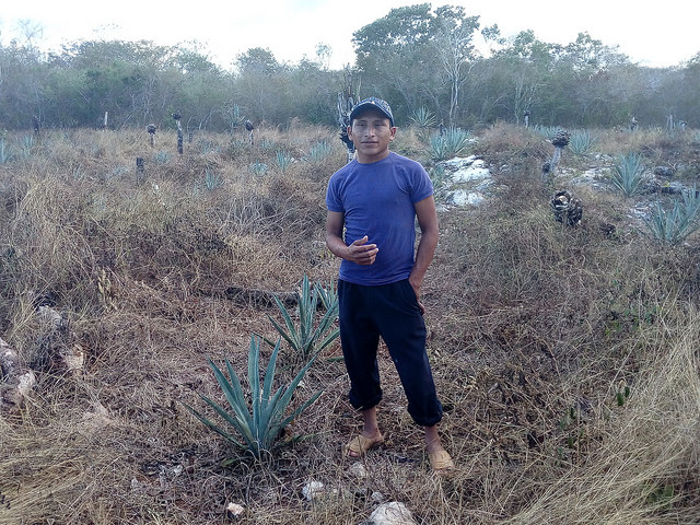 Luís Miguel, un campesino maya de Kimbilá, en el suroriental estado de Yucatán, en México, teme que la instalación de un parque eólico en su comunidad perjudique sus cultivos de maíz y vegetales. Emilio Godoy/IPS