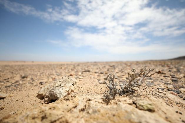 La sequía recurrente en Namibia, que afecta a toda África austral, atenta contra la seguridad alimentaria y el modo de subsistencia de los campesinos. Crédito: Campbell Easton/IPS.