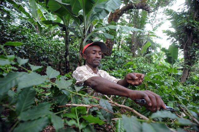 Los bosques gestionados de forma sostenible tienen un enorme y desicivo papel en la lucha contra el hambre y el cambio climático, así como, en la mejora de los medios de vida. Crédito: Simon Maina/FAO.
