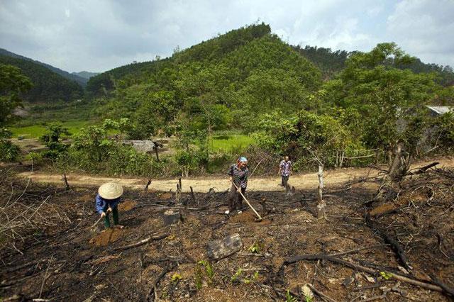 La pérdida forestal representa una sexta parte de las emisiones de gases contaminantes al año.  Crédito: Joan Manuel Baliellas/FAO.