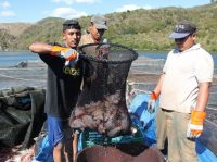 FOTOS: Innovador modelo de crédito rescata a agricultores hondureños