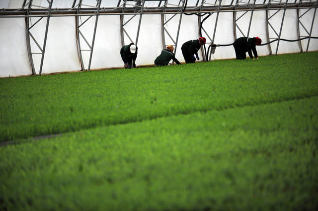 Brasil, Rusia, India, China y Sudáfrica tienen sólidos sistemas de investigación agrícola. Crédito: FAO