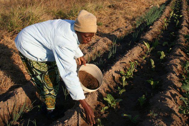 Se pierden 12 millones de hectáreas de tierras cultivables al año por la sequía y la desertificación, 1.500 millones de personas sufren las consecuencias