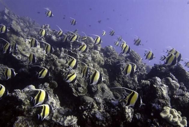 Los océanos están expuestos a 3 grandes amenazas: el cambio climático, la degradación de la biodiversidad y los políticos.