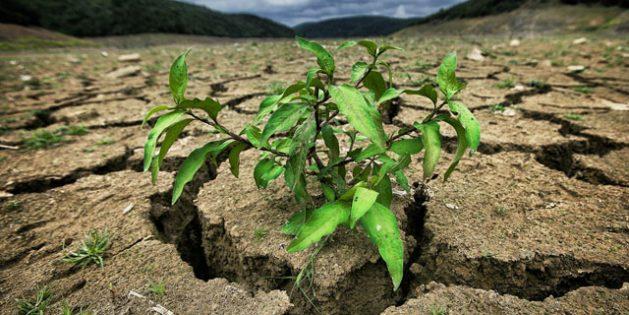 Medio Oriente y el norte de África, donde viven unas 400 millones de personas, es una de las más golpeadas del mundo, precisamente por la sequía y el avance de la desertificación. Crédito: UNCCD.