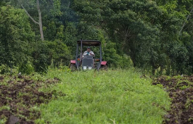 El buen invierno, la estación tropical de las lluvias, en las zonas agrícolas del norte de Nicaragua, frenó este año la migración hacia la vecina región del Caribe Norte de los campesinos, con dañinas prácticas de talar los bosques para cultivar. Crédito: Wilmer López/IPS