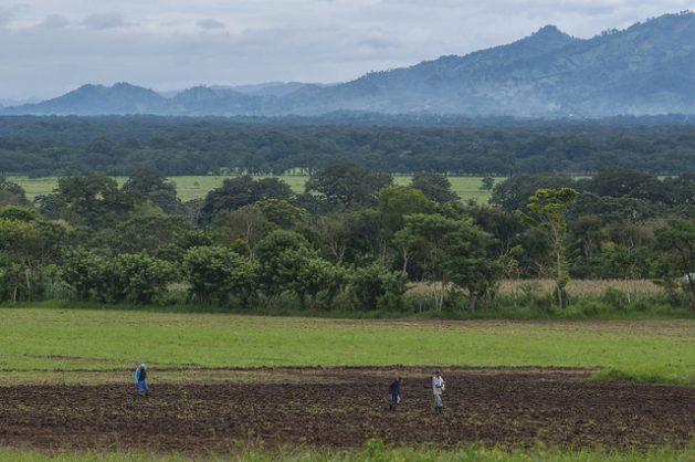 Campesinos en un predio agrícola del pueblo de Sébaco, en el norteño departamento de Matagalpa, en Nicaragua, dentro del Corredor Seco Centroamericano, donde este año las lluvias llegaron generosas, después de años de sequía. Crédito: Wilmer López/IPS