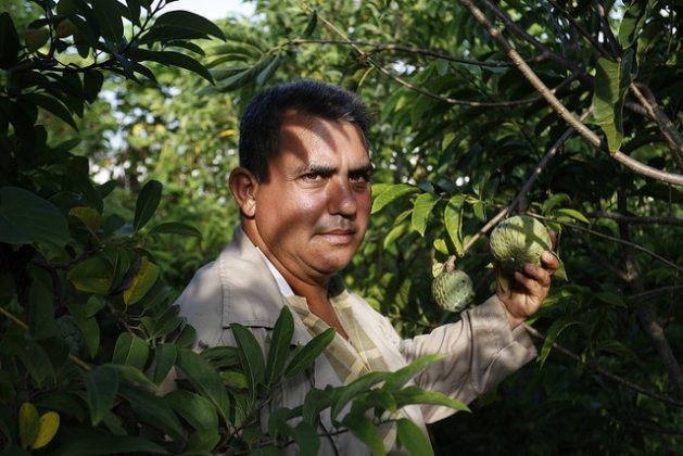 Onay Martínez sostiene un anón en su finca Tierra Brava, en el extremo occidental de Cuba, donde práctica la agricultura de conservación y ha convertido su explotación en un modelo de en el país de este sistema sostenible que perturba mínimamente el suelo. Crédito: Jorge Luis Baños/IPS