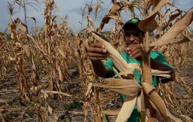 La información precisa sobre el impacto de la sequía contribuirá a reducir la vulnerabilidad en la que viven 10,5 millones de personas a lo largo del Corredor Seco Centroamericano. Crédito: FAO