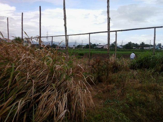 Los restos de sombráculos abandonados que trató de construir un agricultor para proteger a sus cultivos de los efectos del cambio climático en Trinidad. Crédito: Jewel Fraser/IPS.