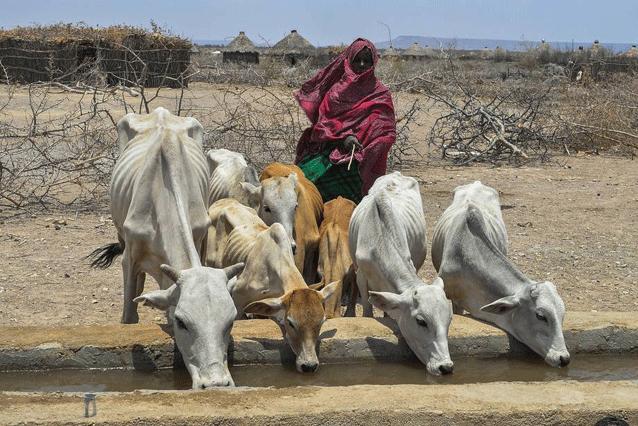 Golpes climáticos consecutivos causaron una sequía tras otra, dejando casi nada de pastura para los animales y a más de 8,5 millones de personas necesitadas de asistencia alimentaria. Crédito: FAO