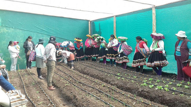Mujeres que se dedican a la agricultura de sobrevivencia a más de 3.300 metros sobre el nivel del mar en las alturas de del sur del departamento de Cusco, en los Andes de Perú, en el municipio de Cusipata. Con el apoyo de organizaciones no gubernamentales han instalado invernaderos o fitotoldos que les permite producir hortalizas diversas venciendo las inclemencias climáticas. Crédito: Janet Nina/IPS