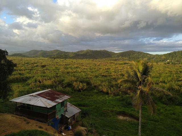 Leyte Sab-e peatland in Leyte island, Visayas province, Philippines. Credit: Stella Paul/IPS