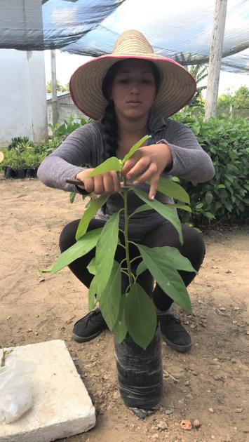 El sector agropecuario cubano demanda mano de obra calificada, en un país que enfrenta despoblación de las zonas rurales. El Instituto Politécnico Agropecuario Tranquilino Sandalio de Noda, el más antiguo de Cuba, en la occidental provincia de Pinar del Río, aprovecha el marco de Profet para fortalecer la formación técnica. Cortesía de Peter Tschumi