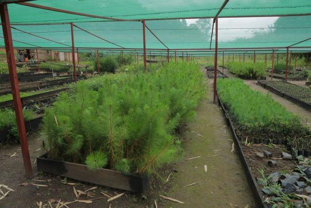 Uno de los muchos viveros en el Centro Nacional de Semillas de Árboles de Ruanda. La institución centraliza el suministro de semillas de árboles en todo el país, incluido el establecimiento de nuevas fuentes de semillas, la mejora de los árboles con deficiencias de crecimiento y la recolección y certificación de semillas. Foto: Emmanuel Hitimana / IPS