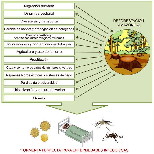 En este gráfico se representan los principales problemas y actividades asociados con la deforestación de la Amazonia que tienen impacto sobre las enfermedades infecciosas. Infografía: SciDev
